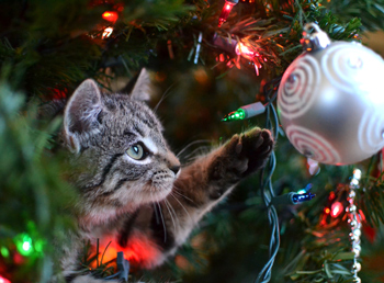 how to keep your cat off the christmas tree - Cat Christmas Decorations