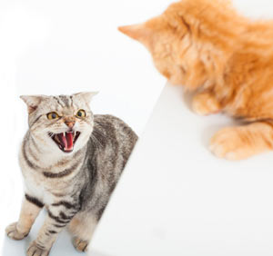 Aggressive cat hissing at a new cat.