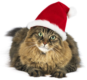 Keep your cat safe this holiday season with these tips.