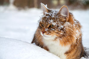 Make sure your cat can stay warm during the cold months.