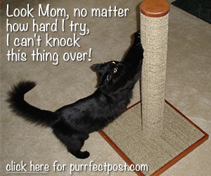 Look Mom, no matter how hard I try, I can't knock this thing over!