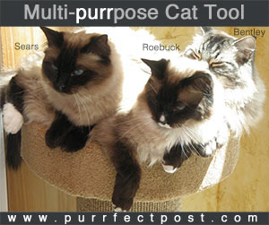 Multi-purrpose Cat Tool