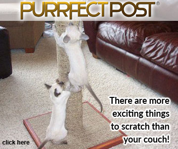 There are more exciting things to scratch than your couch