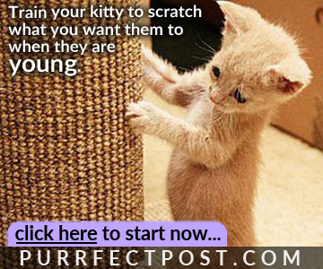Train your kitty to scratch what you want them to when they are young.