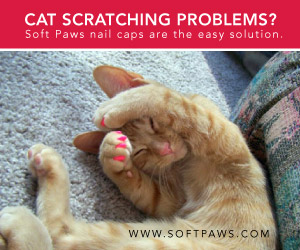 Easy Solution to Cat Scratching Soft Paws