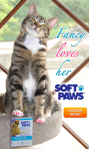 SoftPaws Fancy Loves