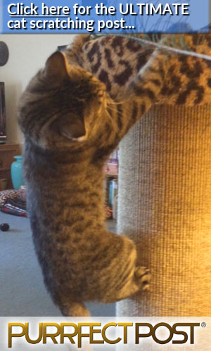Click here for the ULTIMATE cat scratching post, and never declaw your cat!