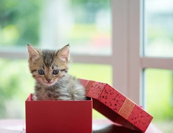 List of great holiday cat gifts.