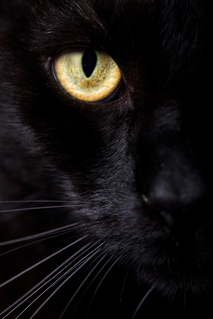 Black cats may be feared due to superstition.