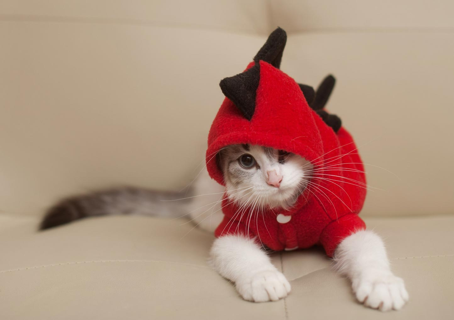 Cat in a dinosaur costume & Cat Costumes: Purr-ific or Cat-astrophe?