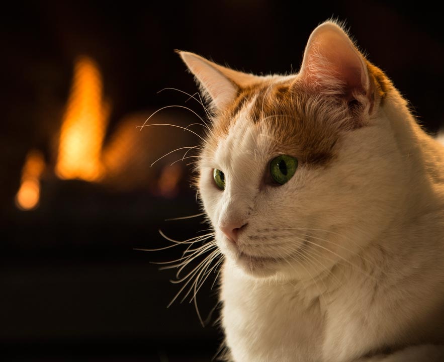 Cats can actually start house fires.