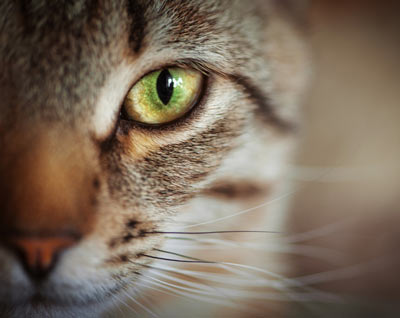 Cat myths and facts for cat-lovers.
