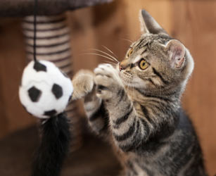Cats need toys for stimulation and fun and they are easy to make.