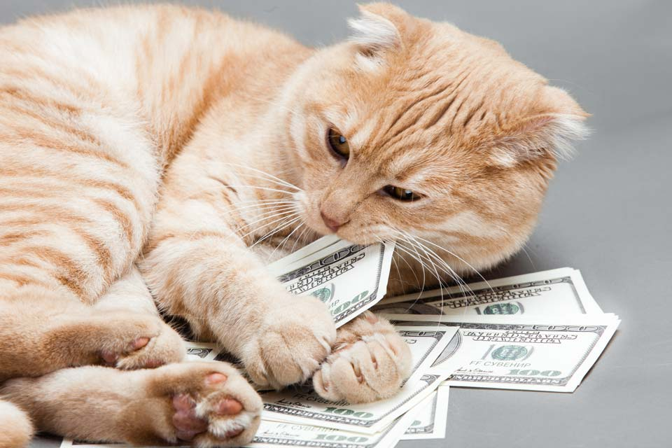 Cat vet costs climbing; prepare for cat vet bills.