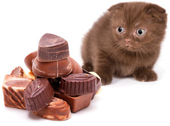 Cats and chocolate do not mix.
