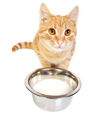 Is Milk Good For Cats