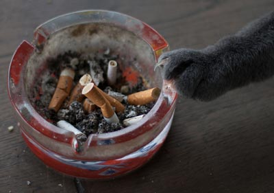 Cats are negatively affected by smoke.