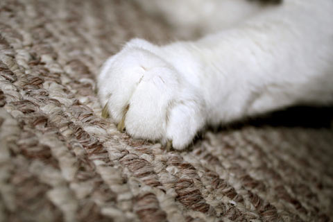Cats may scratch carpet if they're stressed.