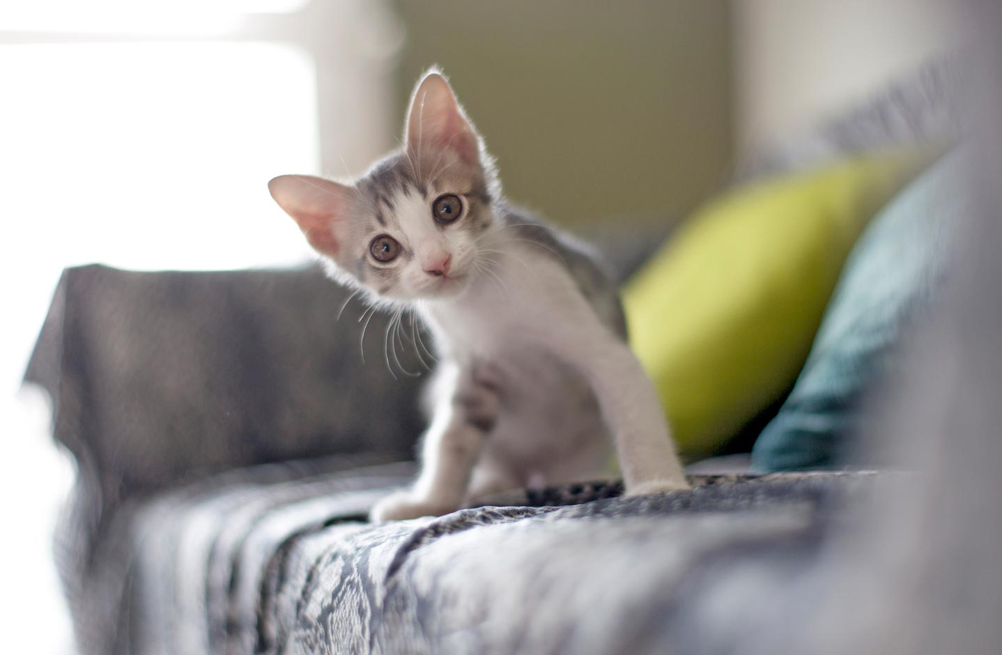 Common Emergencies Suffered By Kittens