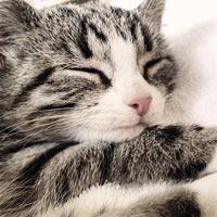 cozy_cat_home.jpg