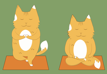 Cats have different requirements for achieving Zen-like peace than humans.