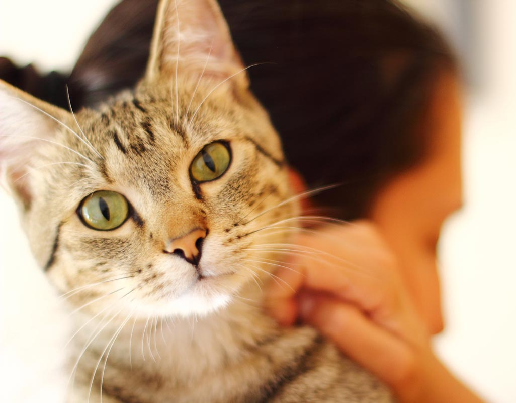 Skin culture and sensitivity testing can help diagnose skin problems in cats.