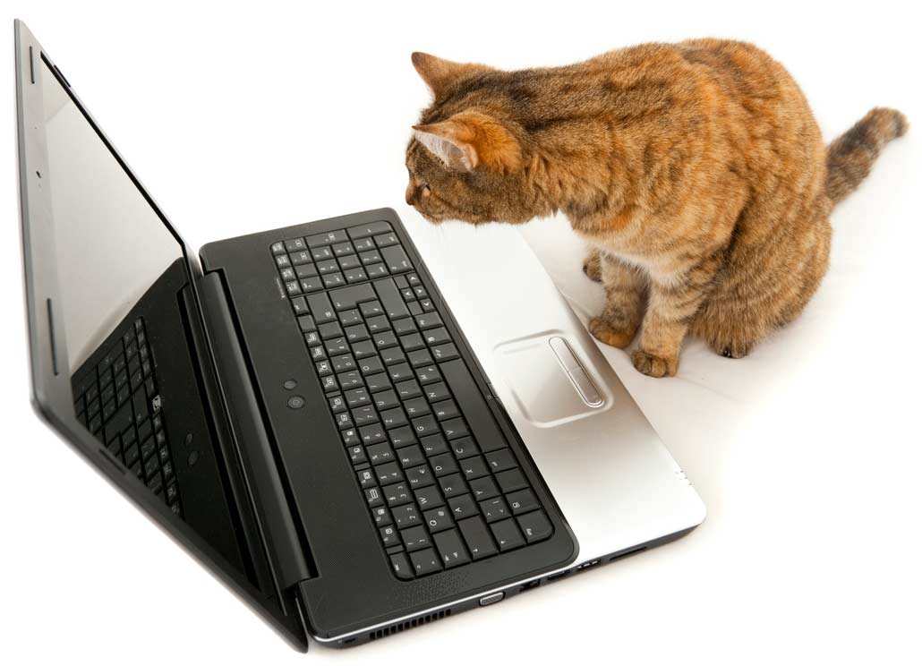 Why checking the internet when your cat is sick might be a bad idea.