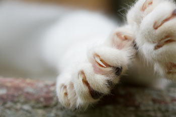Declawing cats is inhumane and unnecessary.