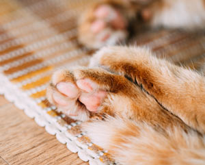 Cats sweat mainly through their paws.