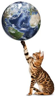 Green-up your cat care routines this Earth Day.