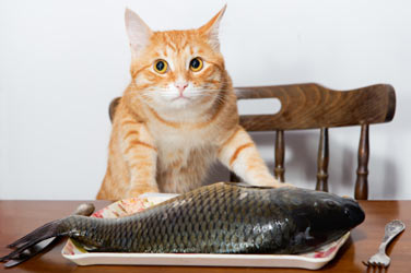 Cats love fish, but is it safe?