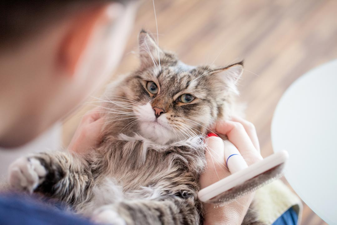 Learn how to make small tweaks in feeding for a cat with hairballs.