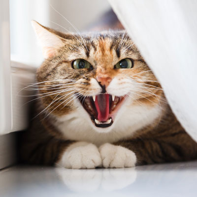 Redirected aggression can cause erratic behavior in cats.