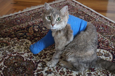 Learn what to do if your cat breaks a bone.