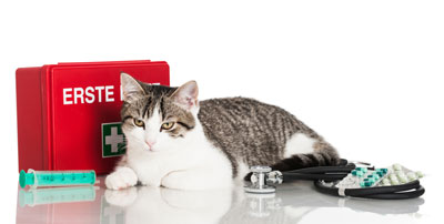 Cats sometimes need first aid.