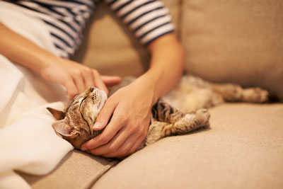 Learn what to do if your cat is bleeding.