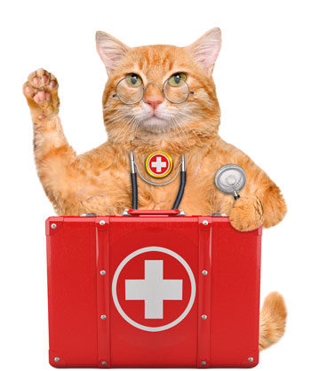 Be sure you're ready for a feline emergency with a well-stocked first aid kit.