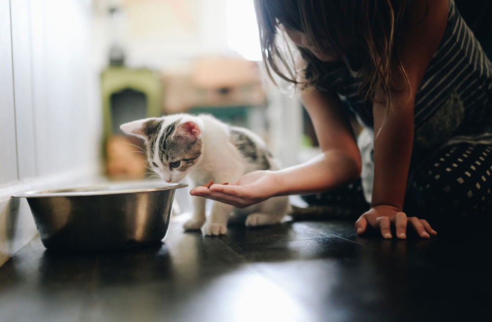 Learn some great tips on nutrition for cats.