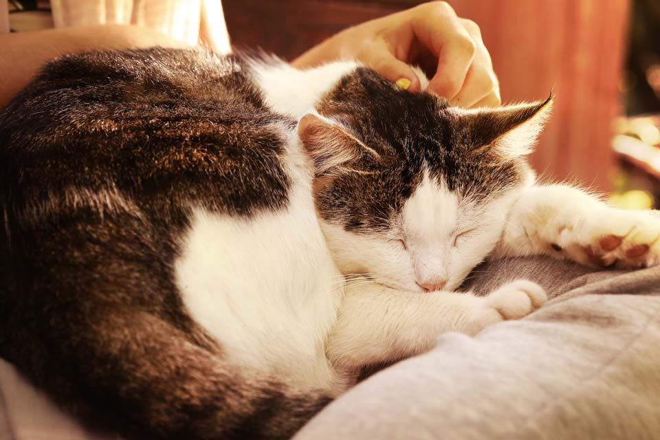 Caring For Your Senior Feline