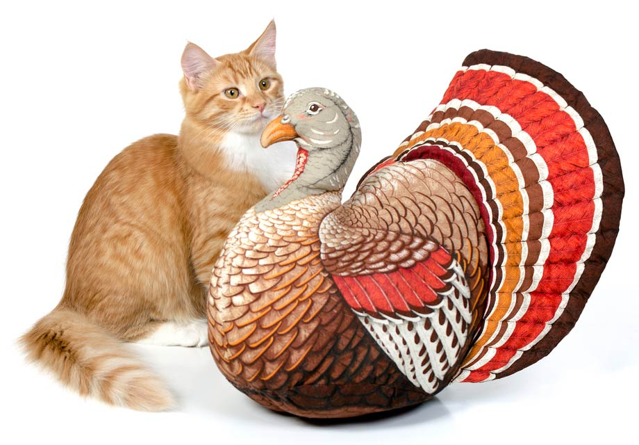 Learn about hosting Thanksgiving when you have a cat.