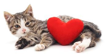 Valentine's Day can be enjoyable for you and your cat.