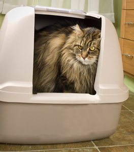 Cats are particular about litter box placement.