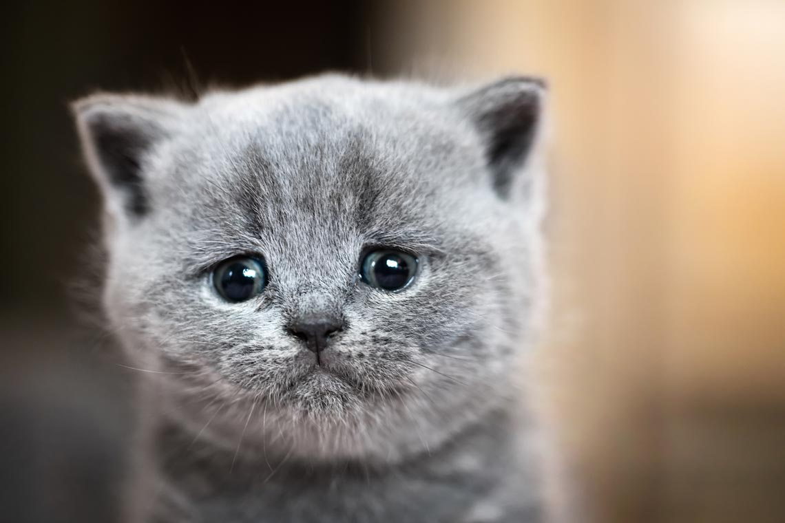 Learn about signs of grief in cats.