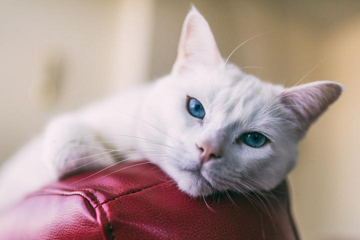Some areas of a cat's body can harbor hidden pain.