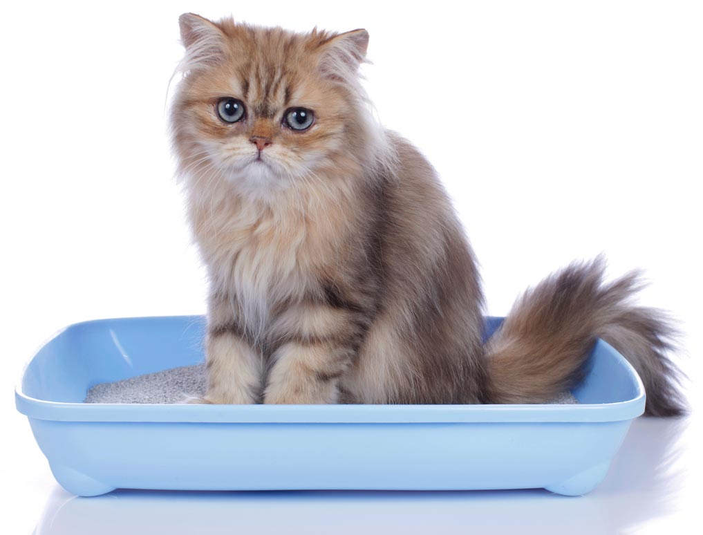 The history of cat litter is mostly accidental.