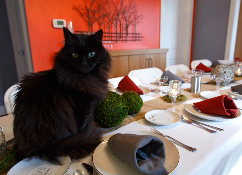 There are extra dangers for cats during the holidays.