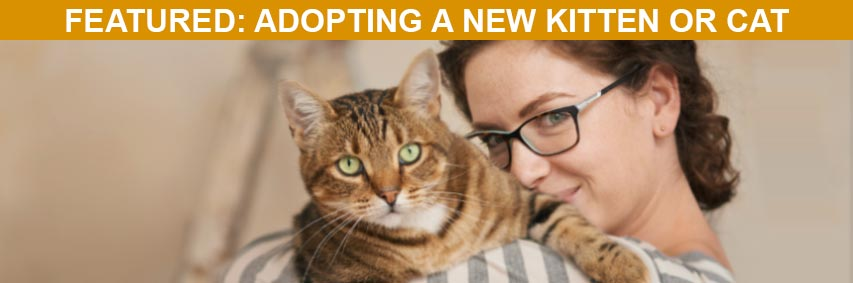 Featured Article: Adopting a New Kitten or Cat