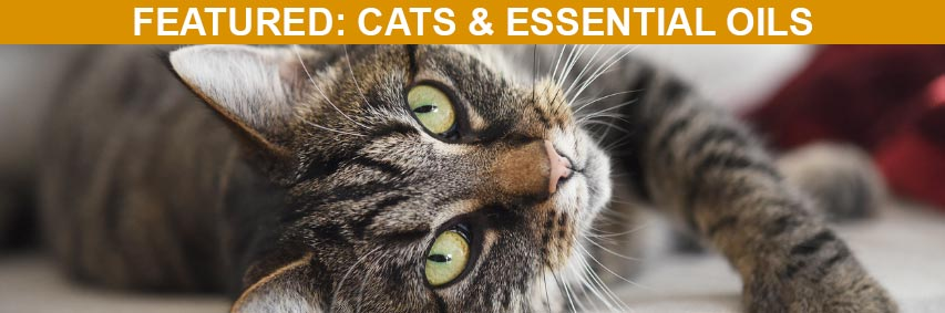 Featured Article: Cats and Essential Oils: Are They Safe Together?