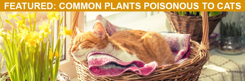Featured Article: Common Plants Poisonous to Cats
