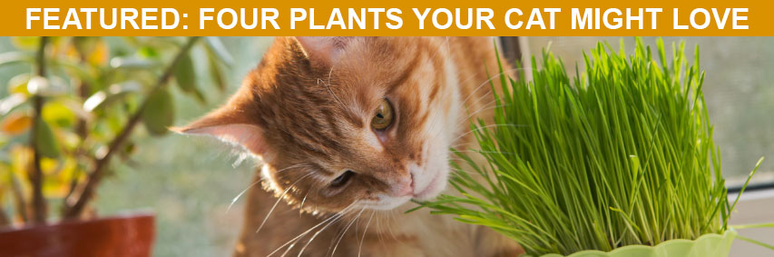 Featured Article: Four Plants Your Cat Might Love